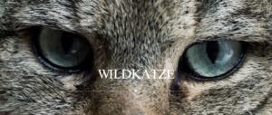 Wildkatze Dewist